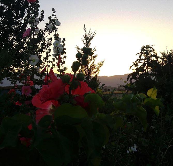 シAweSomeNesSツ 💜 aWeSoMeNeSs ☀ sunset mountain flowerslover myshot...