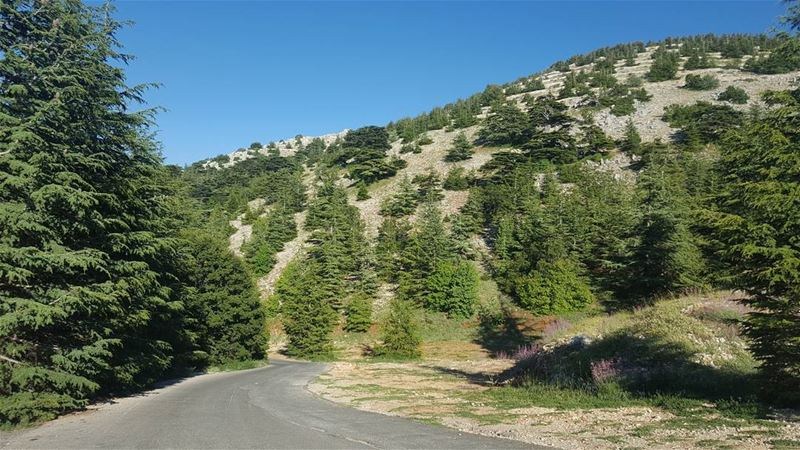 """I took a walk in the woods and came back taller than the trees."" ... (El Bârouk, Mont-Liban, Lebanon)"