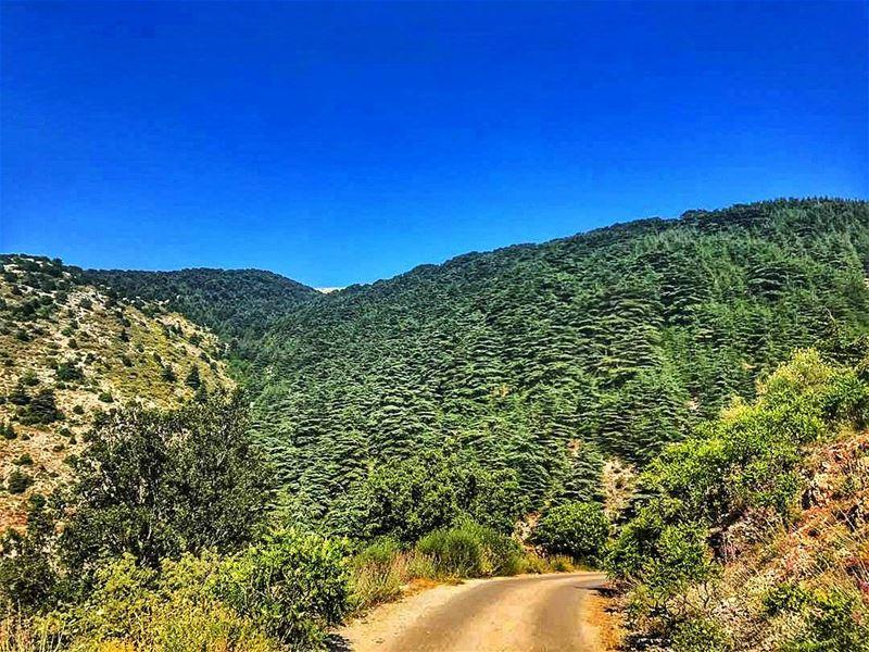 landscape landscapephotography naturephotography cedars cedarforest ... (Al Shouf Cedar Nature Reserve)
