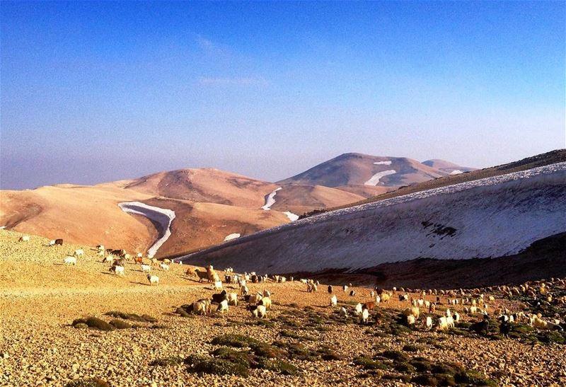 Summiting Qornet el Sawda - 3088m - Sunday 9 Jul 2017 - makmel ...