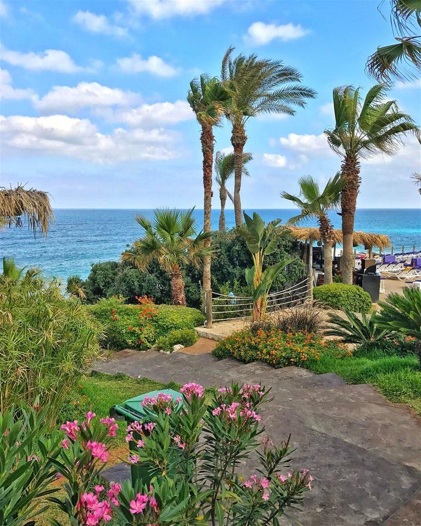 Postcard from the Mediterranean Sea 🌊 (Batroûn)