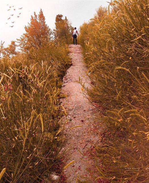 🍁some walks u have to take alone ~〰〰〰〰〰〰〰〰〰〰〰〰〰〰〰〰 طريق الأربعين/بقاعصفري (Aïn el Arbaaïn)