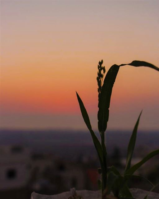 rest your mind; calm your heart. 🌱🌖......... canon  canon700d ... (Lebanon)
