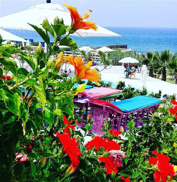 Sea, sun.... love lebanon lazyb nature livelovelebanon livelovebeirut ...