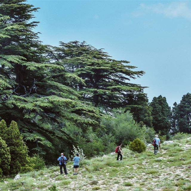 cedar tree lebanese mountains clouds sky photographer hiking...