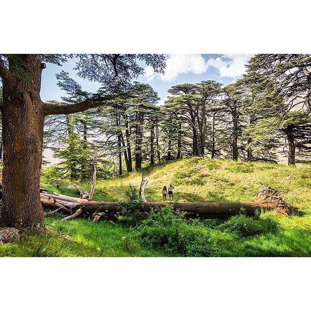 Alice in wonderland @livelovecedars by @nadimkesserwani (Cedars Of Lebanon)