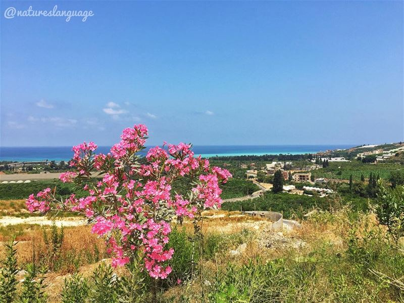 A must visit place sharhabil lebanon mylebanon lebanon_hdr ... (Sharhabil)