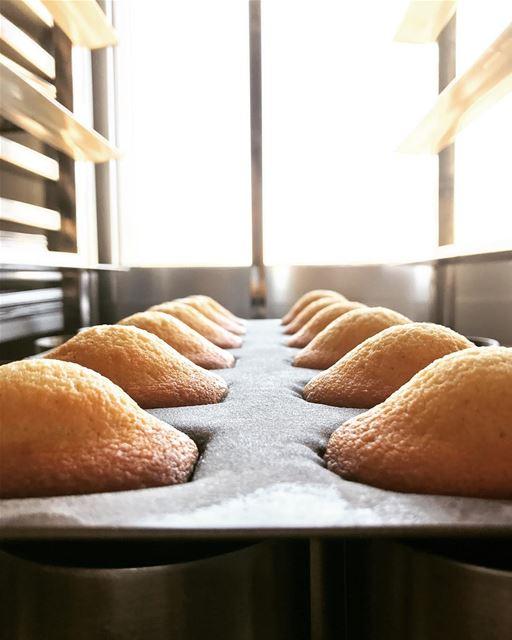 Madeleine pur beurre 😋😋 livelovefood livelovebeirut beirut madeleine...