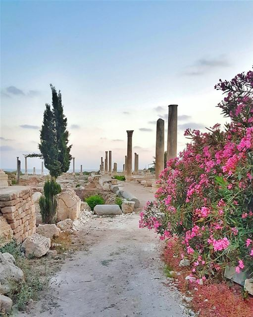Stepping into this ancient Roman city on the sea side of Tyre literally... (Tyre, Lebanon)