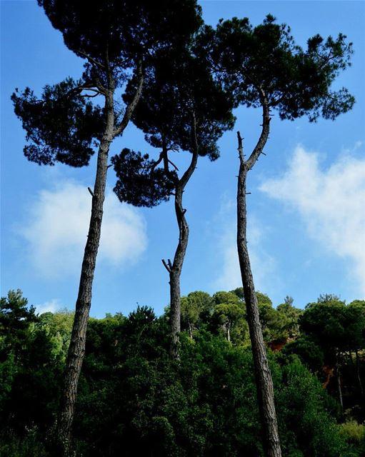 Beautiful nature lebanon bikfaya naas nature bleusky amaizingweather ... (Naas - Bekfaya)