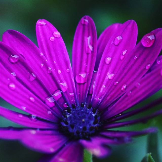 Good morning goodmorning bonjour flower flora fleur purple mauve ...