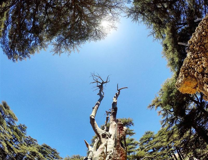 CedarsOfGod TreeOfLife JesusSculpture CenterOfTheWorld Cedars Forest... (Cedars of God)