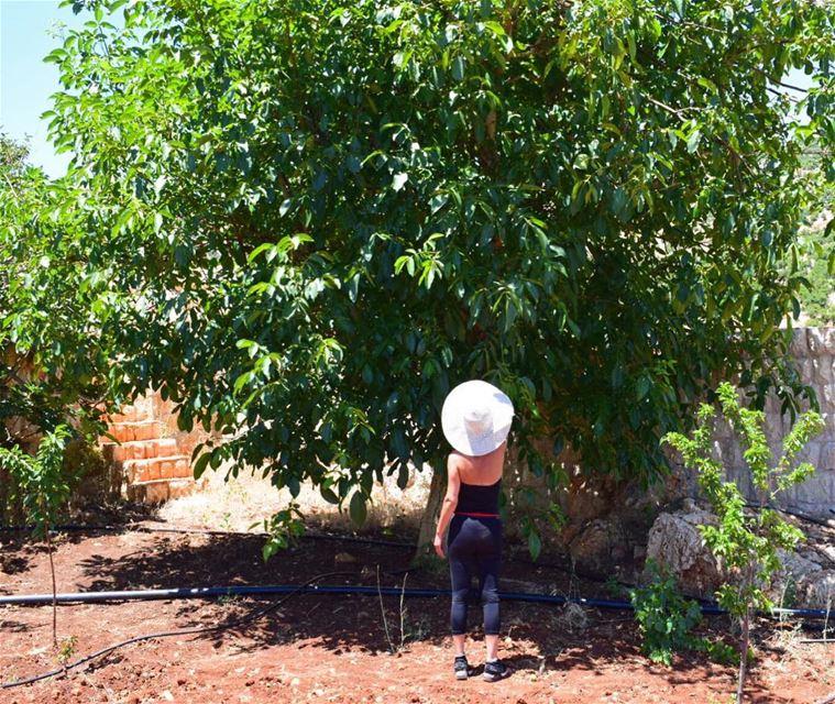 👒🍃... trees fruitpicking summer hat outdoorhat outdoor ...