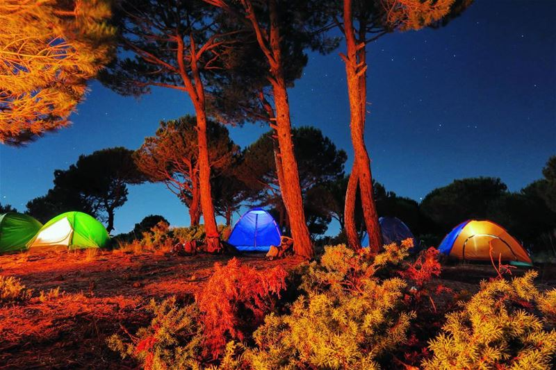 camp night pine trees tents fire ...