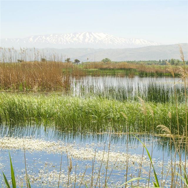 Morning 😊💙............. Lebanon livlovelebanon ... (`Ammiq, Béqaa, Lebanon)