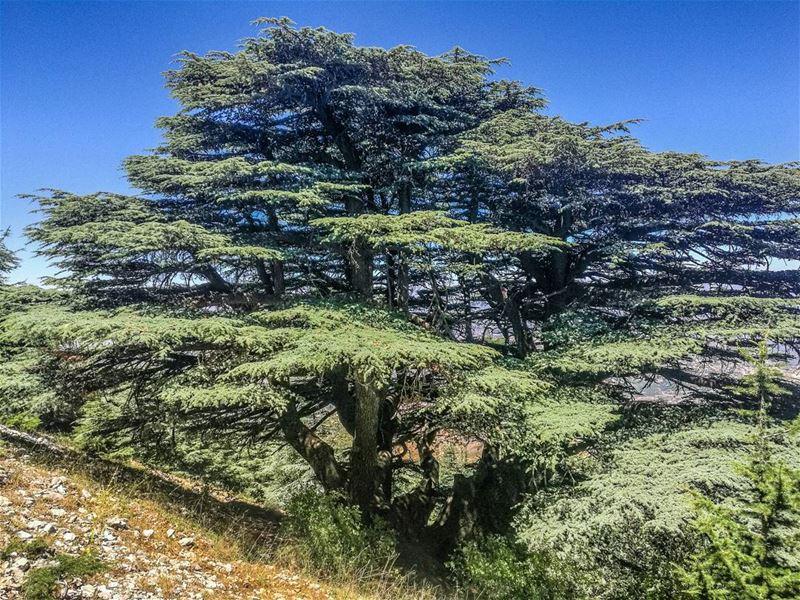 Still standing strong 🇱🇧🇱🇧................ Lebanon ... (Maasser Ech Chouf, Béqaa, Lebanon)