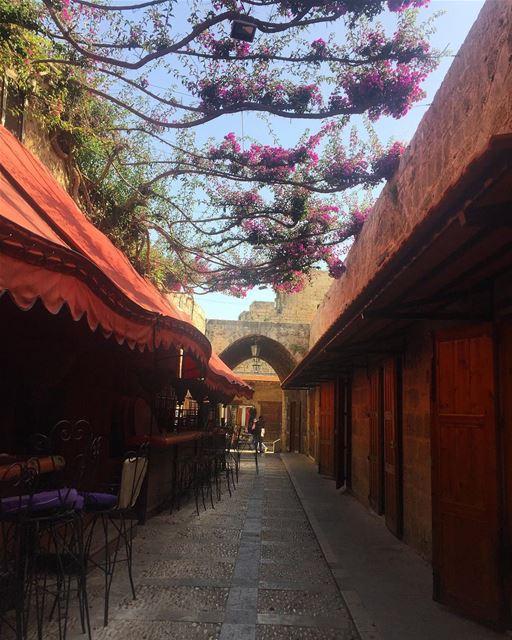 🌺🌸🌺 byblos jbeil love streets details flowers peace lebanon ...