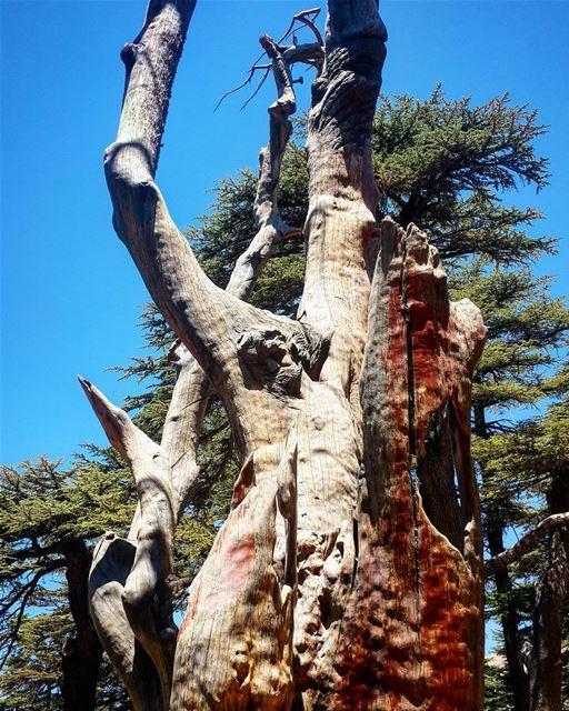 CedarsOfGod TreeOfLife JesusSculpture Jesus Cedars Forest Lebanon... (Cedars of God)