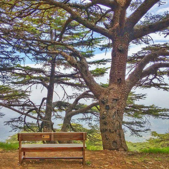 Come have a seat @livelove.chouf by @buddcorp (Chouf)