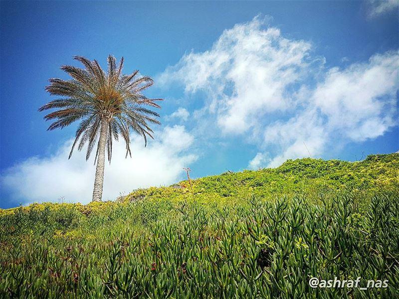 السماءُ يا سيِّدتي، أصبحتْ واطِئَةْوالغيومُ العالية أصبحتْ تَتَسَكَّعُ على (Tyre, Lebanon)