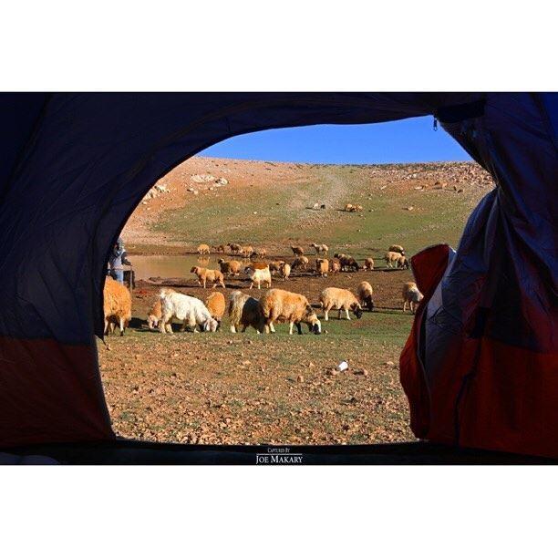 camping campinglife sheep liveloveehden livelovelebanon ...