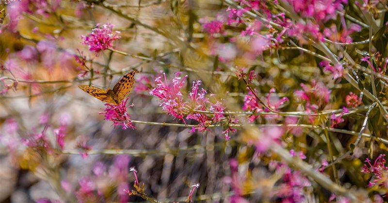 Love her but leave her wild butterfly nature photography ...