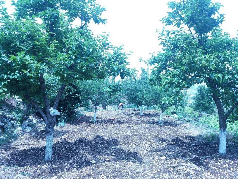 Photo taken by:@nadineangel_official nature naturephotography trees ... (Feitroun, Mont-Liban, Lebanon)
