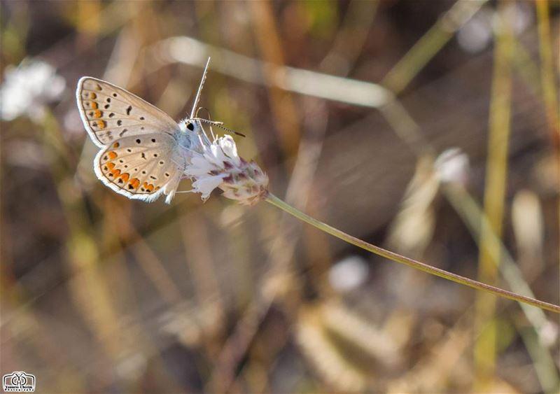 Good morning my friends ☺ nature butterfly summer lebanon ...