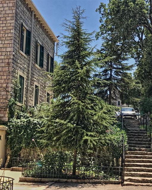 house cedar cedartrees lebanon🇱🇧 amazing nice weather nature ...