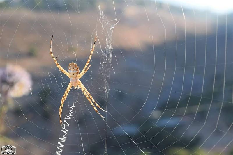 Spider Web nature spider_web spider insect web lebanon ...