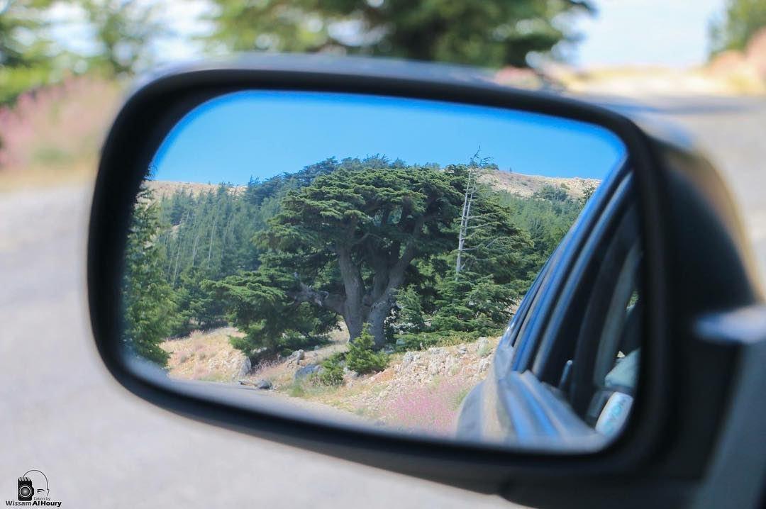 cedars chouf mountlebanon choufbiospherereserve tree oldtree mirror... (Arz el Chouf)