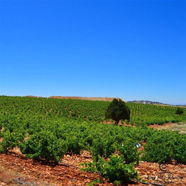 لبنان RoyALKhouryPhotography nikon nikonlebanon lebanon beirut ...