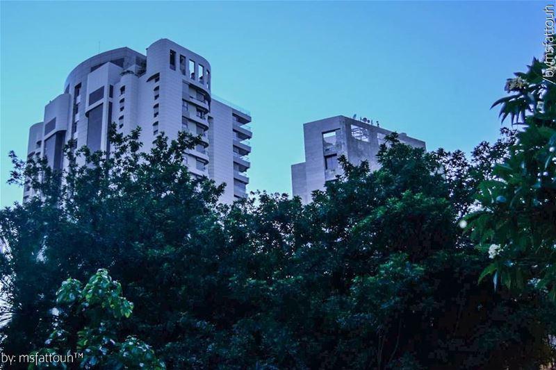 When trees dress up buildings.. goodmorning friday urban sunrise ...
