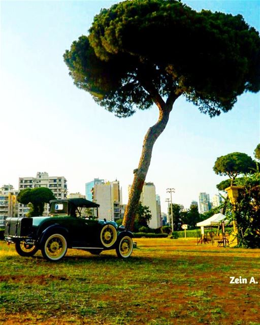 classic old car tree sands streetphotography outdoors noperson ... (Beirut, Lebanon)