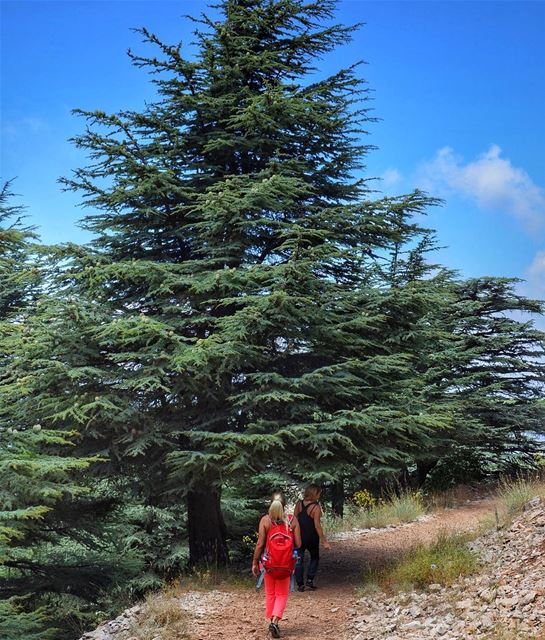 Over the mountains and through the woods 🌲 (Arz el Chouf)