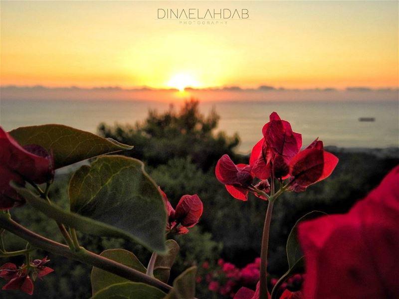 Question d'une perspective ! 💮____ 961lens sunset sunsetlovers ... (Byblos, Lebanon)