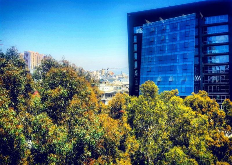 What's more beautiful than a leafy urban city? beirut trees beiruting ... (Beirut, Lebanon)