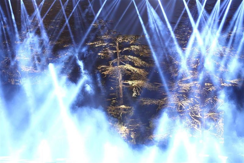 The cedars of TANNOURINE !!! lebanon tannourinefestival ... (Tannourine Cedars Nights ليالي أرز تنورين)