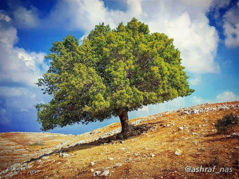 هَوْنيك في شجرة ورا النبع الغميقمحفورلي صورة على كعبا العتيقوضاع الهوى وت (Bent Jbeil)