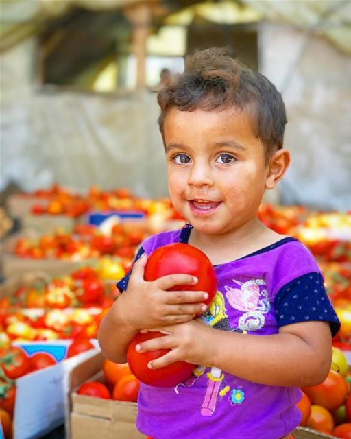 Family business 🍅 Tomato Syrian Refugee 👦🏽 (Beit Chléla, Liban-Nord, Lebanon)