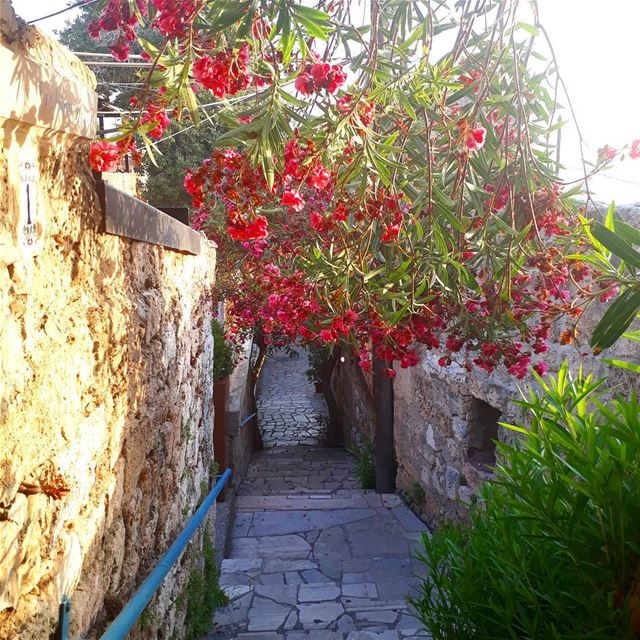 byblos jbeil eveningwalk summervibes flowers colorful meetlebanon ... (Byblos - Jbeil)
