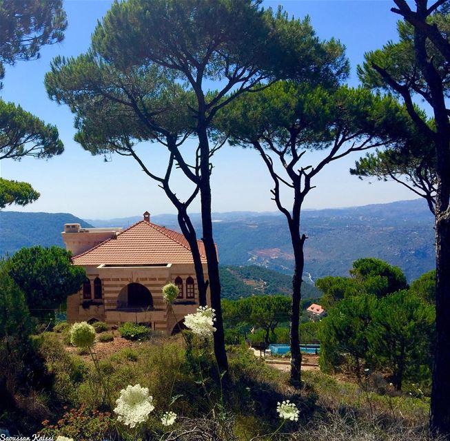 lebanonhouses architecture pinetrees nature ...
