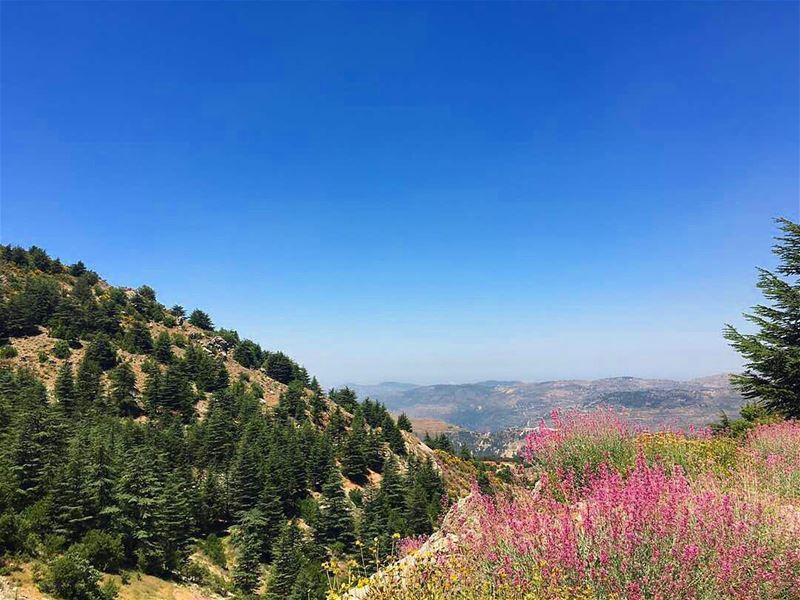 naturephotography nature naturelover colorful colors cedars... (Al Shouf Cedar Nature Reserve)