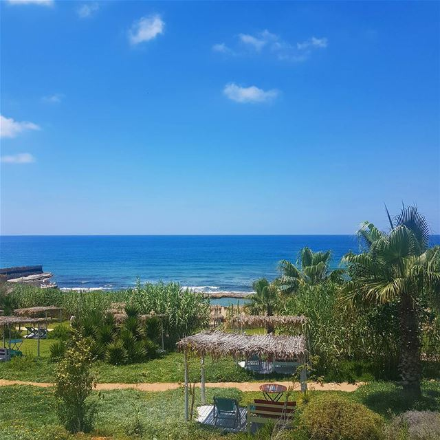 Green.. lebanon  beach  summer  sun  sea  nature  liban  libano  travel...
