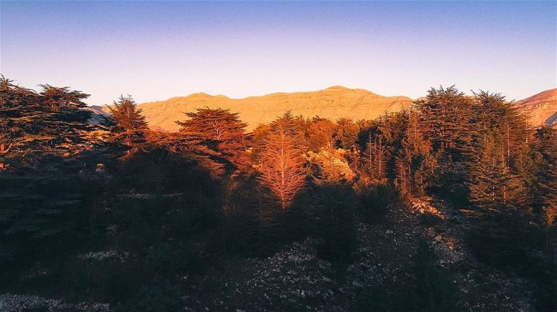 Good morning from the beautiful Cedar's reserves at Tannourine ... (Tannourine Cedars Nature Reserve)