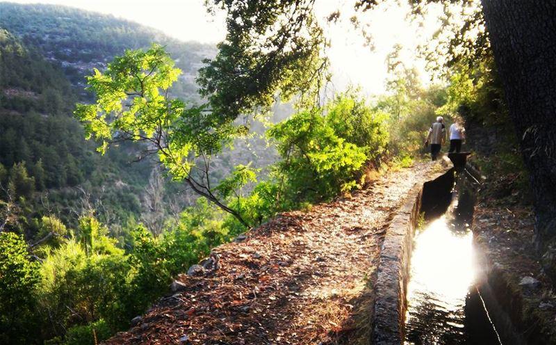 نقاء....🌲 nature naturephotography valley botmeh's_nature shouf ... (Botmeh El Shouf)