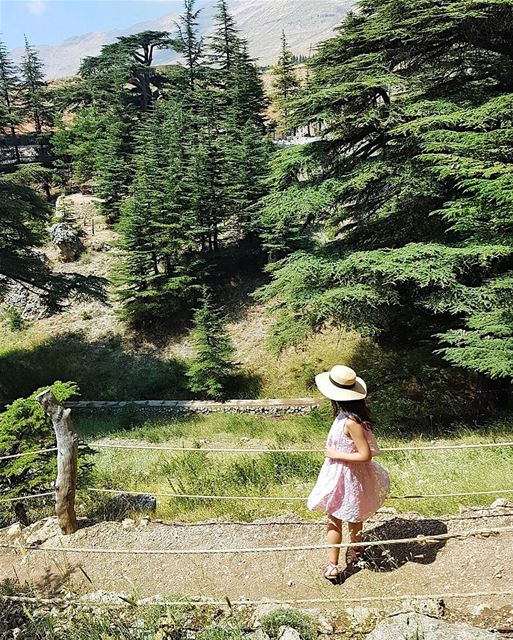 Dancing to the Cedar trees in Lebanon 🌲🌲🌲 There is so much history here... (Cedars of God)