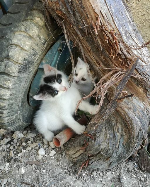 Wild kittens 🐈 lebanon beirut kitten wild cat zeitoun mountains ... (Zeitoun)