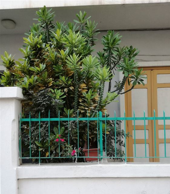 Cactus everywhere 🌵 cactus lebanon beirut ashrafieh beirutcity ... (Beirut - Ashrafieh)