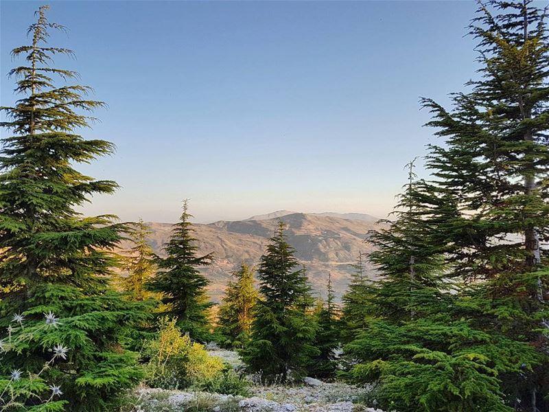 Among the... (Qanat Bakish, Mont-Liban, Lebanon)